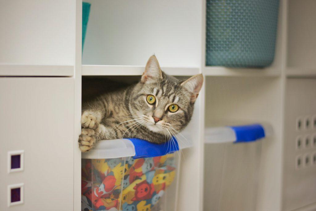 Cat on a closet organizer bin