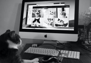 Cat on a virtual meeting with other cats